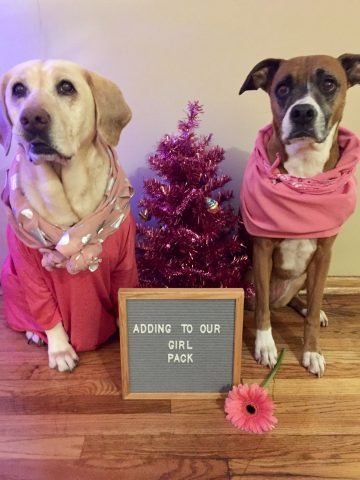 Dogs Mariah and Bella with sign adding to our girl pack