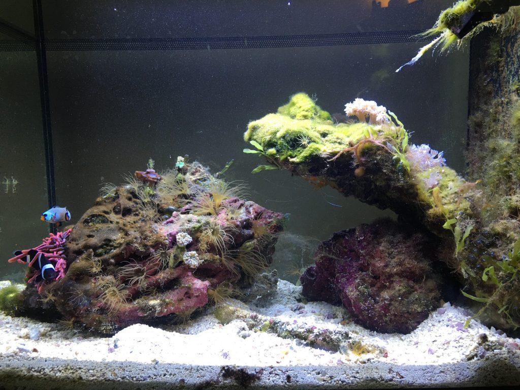 Nano Reef Tank Crashed