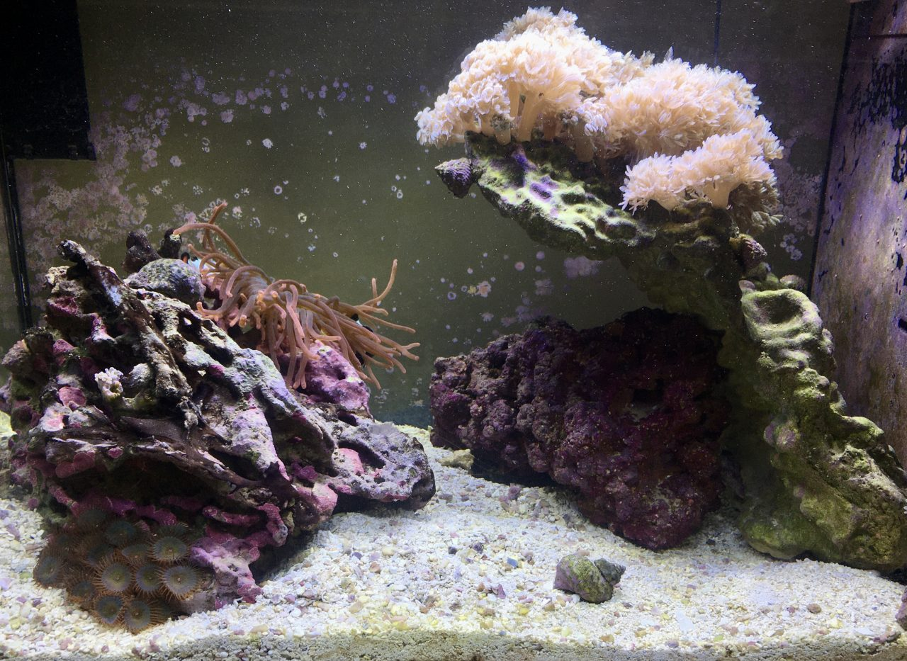 Nano Reef 13 gallon cleaned up